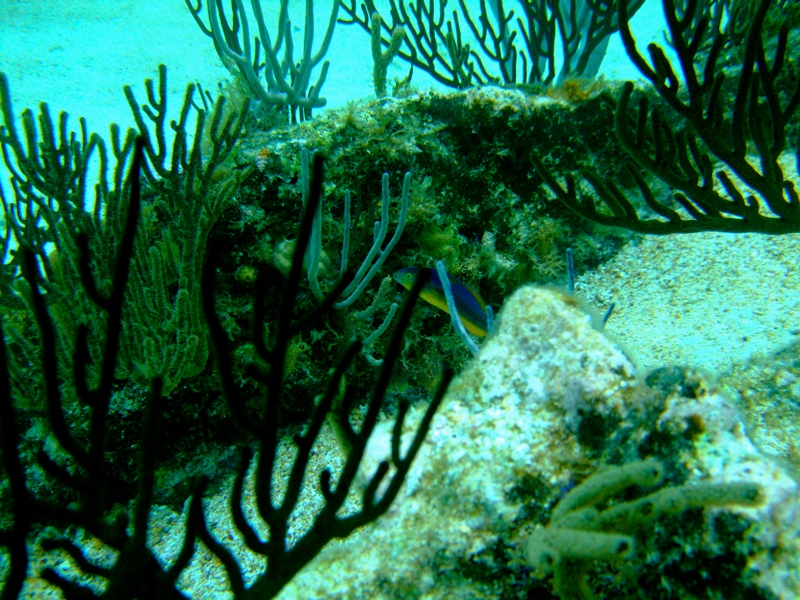 diving tour bermudas